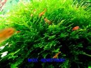 Мох крисмас и др. растения - НАБОРЫ растений для запуска-